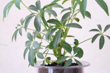 木炭で育てる観葉植物【ハイドロカルチャー】レビュー